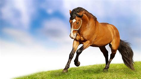 imagenes hd animales wallpapers wallpapers with animals wallpaper cave