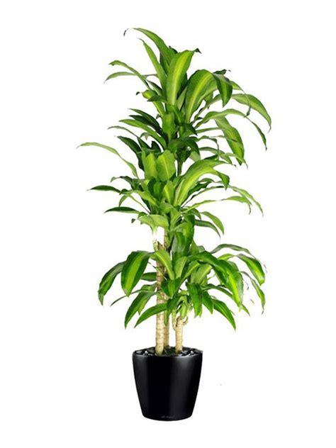 floor plant  happy plant indoor office plants hire