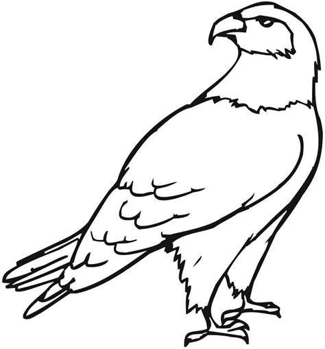 Eagle Coloring Pages - Kidsuki Eagle Coloring Pages Free