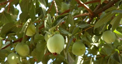 propagating fruit trees fotolia 1220877 xs jpg w 1200 h 630 crop min 1