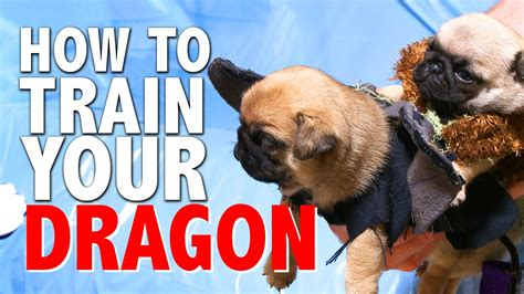 how to your pug how to your pug puppy version