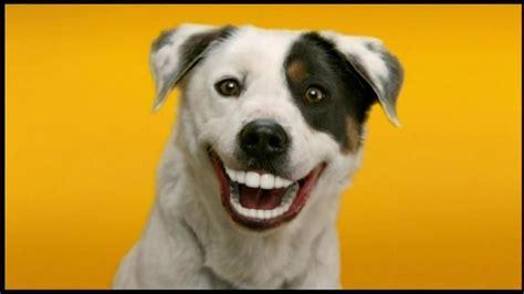 dentastix puppy pedigree dentastix tv spot doggie dentures ispot tv