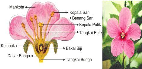 Sari Lerak Aroma Mawar Dan Melati perkembangbiakan tumbuhan secara generatif maslatip