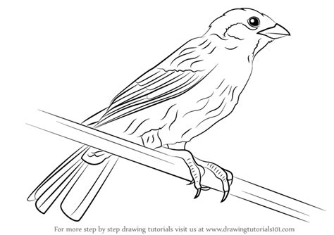 coloring page of house sparrow step by step how to draw a eurasian tree sparrow