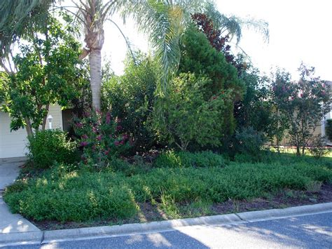 Florida Friendly Landscaping Irritating Neighbors In Florida Friendly Landscaping