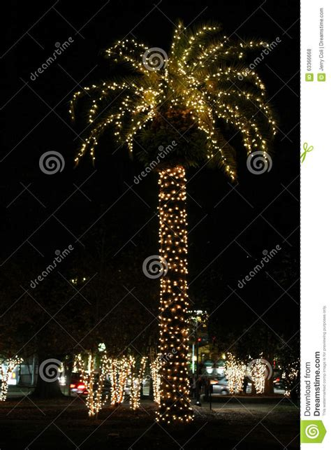palm tree with christmas lights we found 70 images in