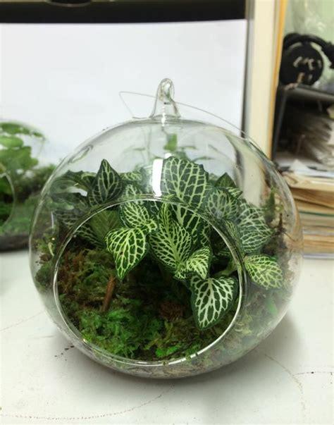 closed terrarium plants  sale northroy nursery