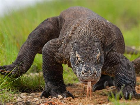 extraordinary prehistoric animals
