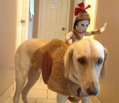 costumes with dogs costumes for dogs niche market