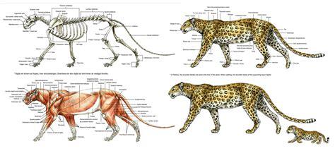 Home Design Sketchbook Terryl Whitlatch Animal Anatomy And Anatomy Sketchbook