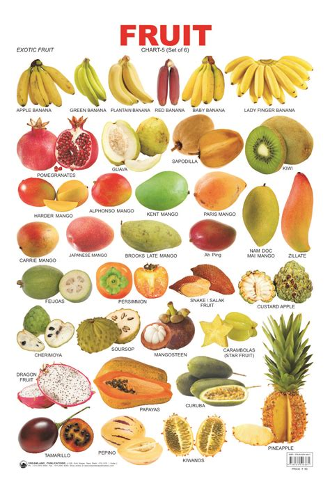 x fruit names types 12 all vegetables names in list