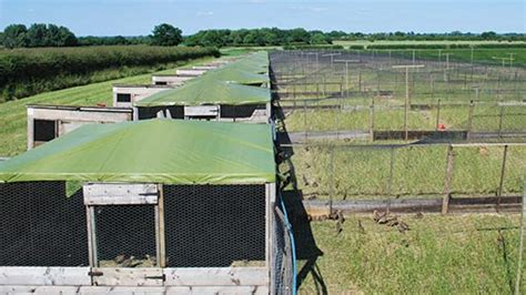 Pheasant Rearing Sheds by Pics For Gt Pheasant Farming