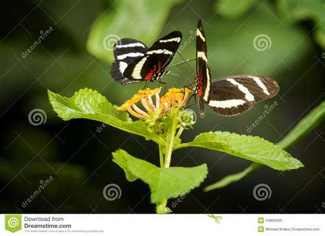 imagenes mariposas para uñas imagenes de mariposas bonitas cool fotos bonitas de