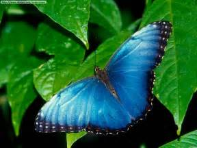 mariposas pics fotos de mariposas i