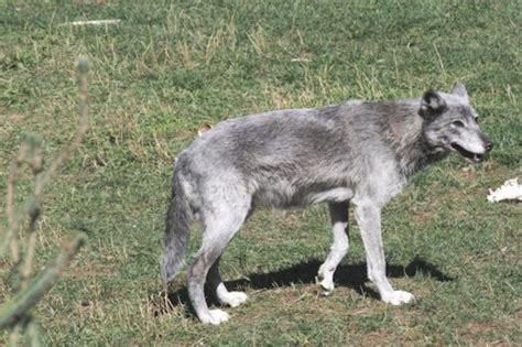 timberwolf color colors set of 1035 timberwolf color
