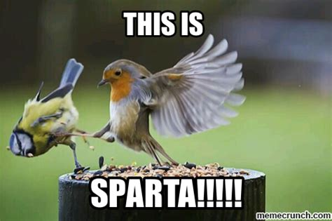 This Meme - this is sparta bird meme memes