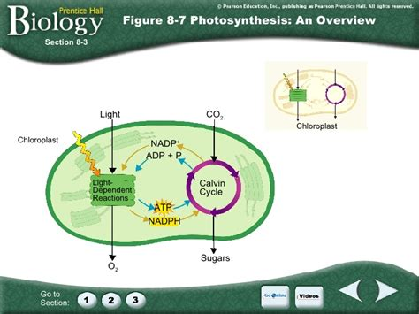 Section 8 2 Photosynthesis An Overview Answers by Ch 8 Photosynthesis
