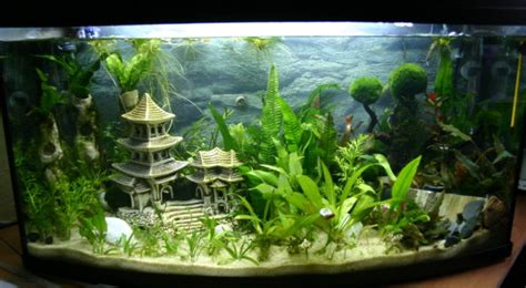 Aquarium Mit Wurzeln Einrichten 6735 by Wasserschnecken Aquarien