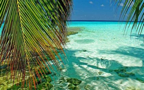 nature landscape maldives tropical sea palm trees