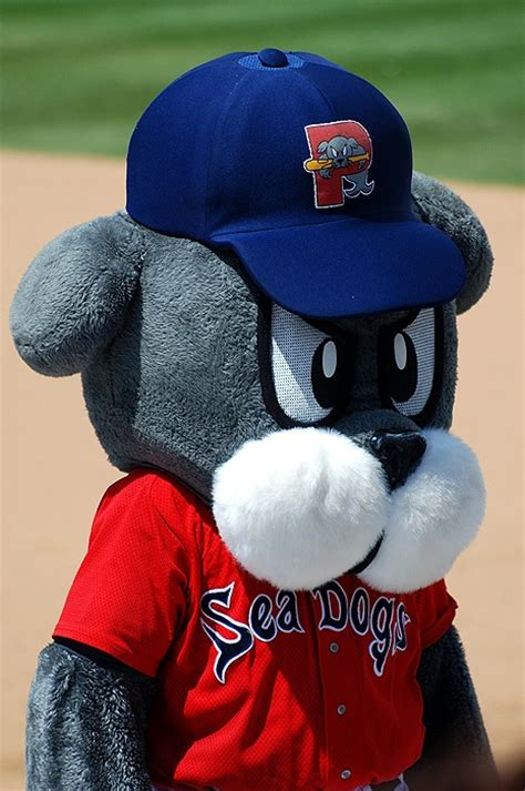 sea dogs portland 10 best images about portland sea dogs on home portland maine and the