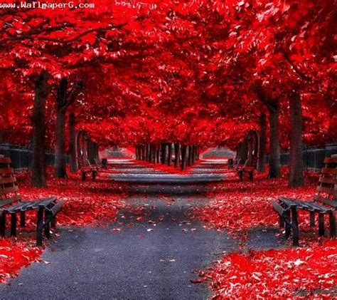 empty red road  hd nature wallpapers mobile
