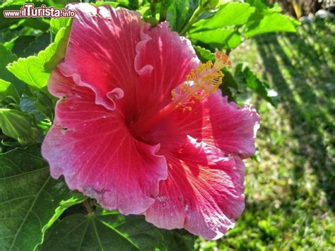 fiori immagini da scaricare domena himalaya nazwa pl jest utrzymywana na serwerach