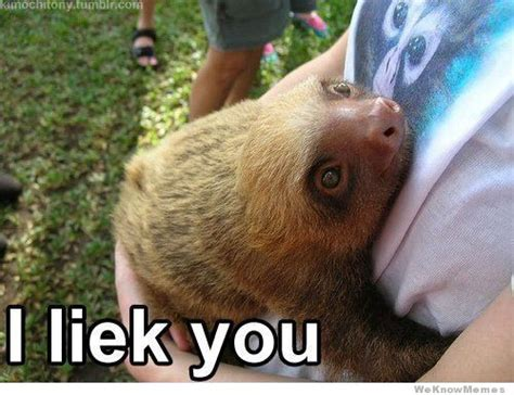 Sloth Meme - i like you sloths