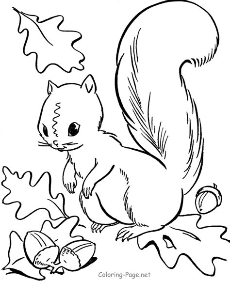 coloring page squirrels squirrel pattern printable coloring home