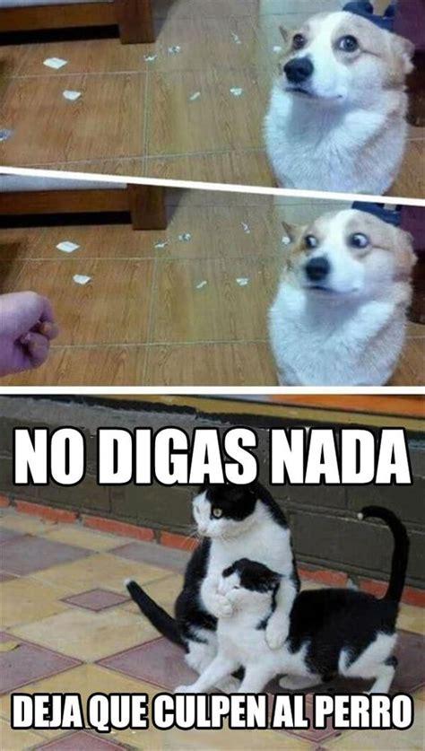 imagenes animales sarcasticas 161 el perro nunca tuvo la culpa xd laimagendeldia