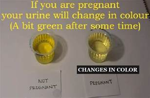 early pregnancy urine color 6 best home pregnancy tests that can confirm pregnancy