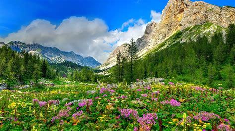 flower valley 1280 800 wallpaper mountain trees flowers valley wallpaper 1920x1080