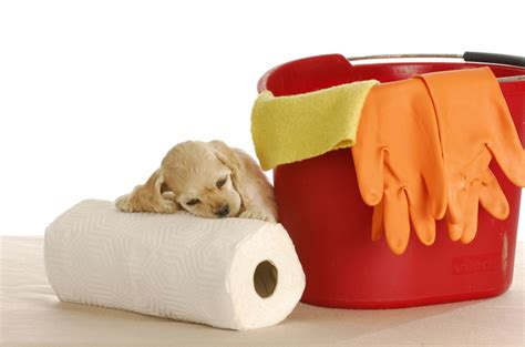 how should it take to potty a puppy 6 puddle proof tips for potty your puppy