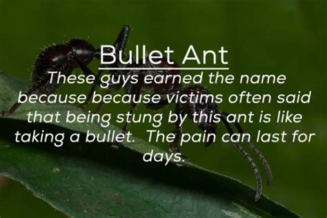 Can Be Deadly these bugs can be deadly 25 pics