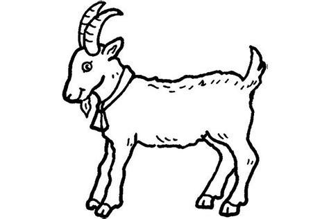 farm goat coloring page pictures of animals coloring kids goat the farm animal