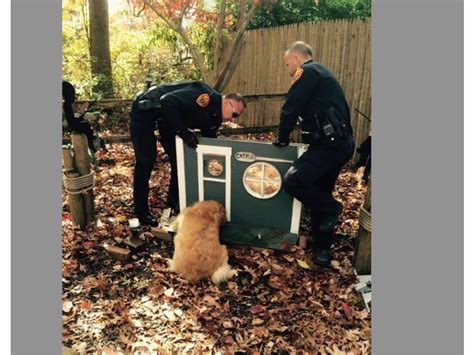 police dog house see police rescue dog who got head stuck in cat house medford ny patch