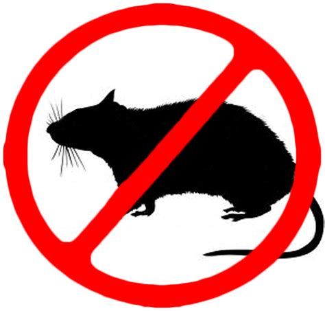 no rats fight quot gang stalking quot