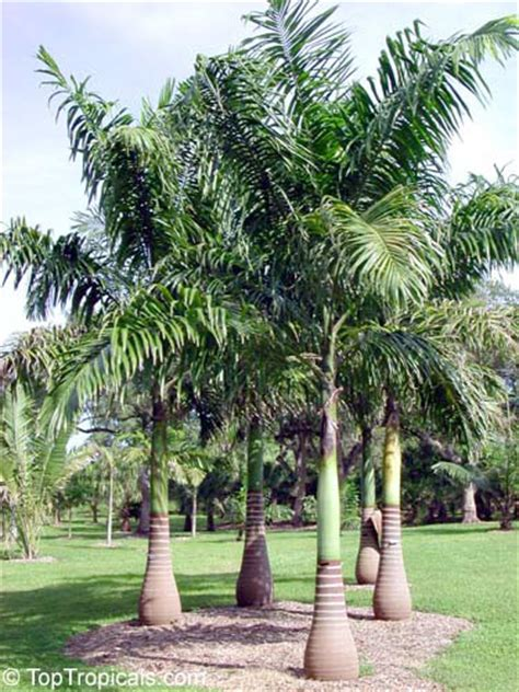 water garden containers for sale marvelous water garden containers for sale 6 9303 jpg