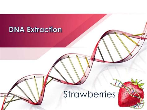 ppt templates free download genetics dna extraction strawberry lab spring 2015