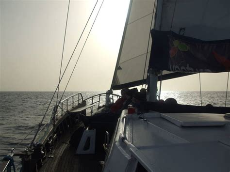 lisbon to madeira by boat dolphin coastal sailing tour from madeira seabookings