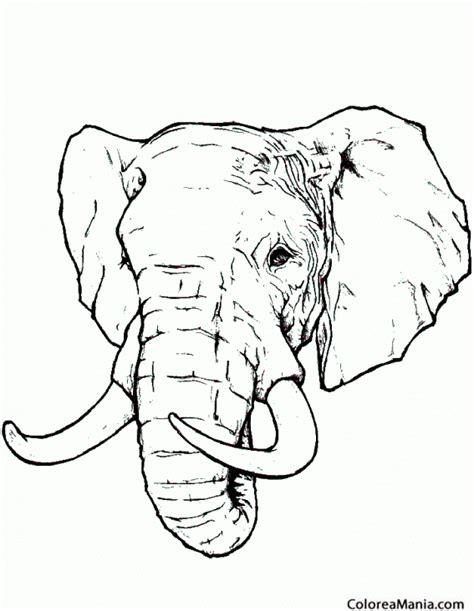 dibujos realistas para colorear colorear cabeza de elefante realista animales de la