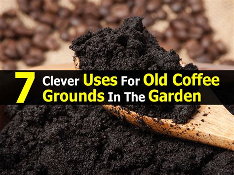 Coffee Grounds In The Garden by 7 Clever Uses For Coffee Grounds In The Garden