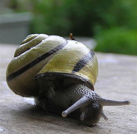 Snail L by Food For Thought Escargot Articles About The Culture Language And Lifestyle
