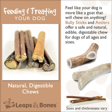 are bully sticks safe for dogs digestible chews leaps bones