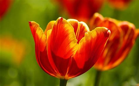 2013 beautiful flower themed photography wallpapers album