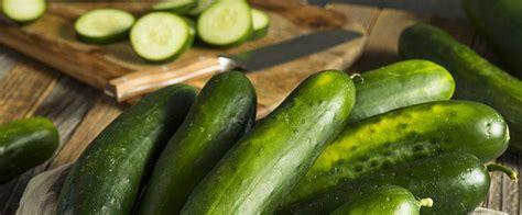 come cucinare cetrioli come cucinare i cetrioli i consigli per le ricette pi 249