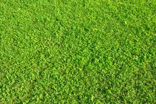 what are the different types of lawn grass ehow uk