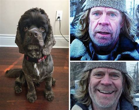 that looks like frank gallagher this looks like william h macy rebrn