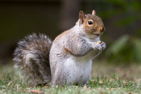 Fotos Animales Mamiferos | fotos de animales mam 205 feros im 225 genes de mam 237 feros