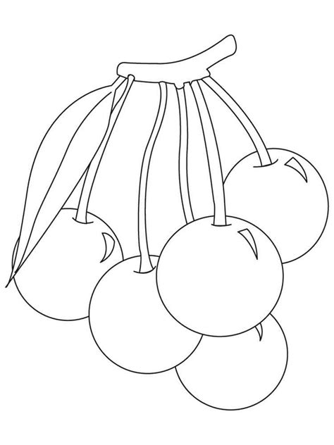 cherry coloring pages   print cherry coloring