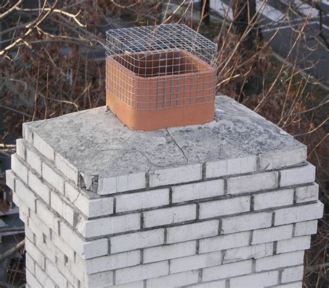 bird in chimney could be migrating chimney swifts - Chimney Mesh Covers
